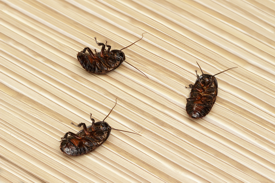 Let's Control Your Pest Problem in Medford, OR