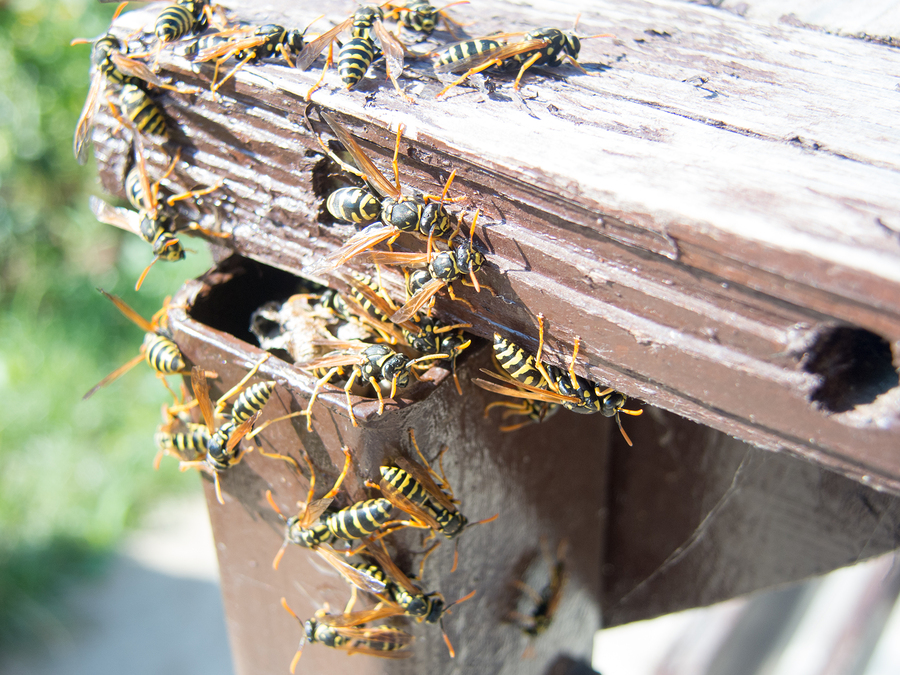 Don't Let Wasps and Hornets Nest on Your Medford, OR Property